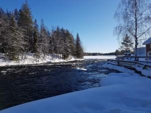 Kuusamon Kitkajoen Käylänkoski. Kitkajoen Käylän ja Säkkilän alueelle suunnitellaan uraanikultakoboltti kaivosta.